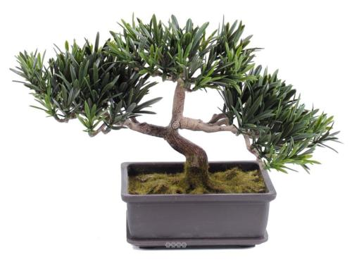 Pin Podocarpus Bonsaï Artificiel H 23 cm