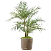 Areca Artificiel Palmier en pot H 170 cm 3 troncs naturels