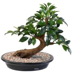 Bonsaï Ficus Artificiel H 40 cm D 41 cm en pot