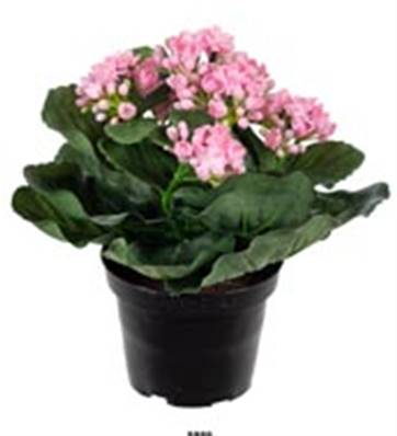 Fleurs Kalanchoe artificiel Rose en pot H 20 cm