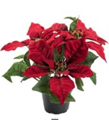 5 Fleurs Poinsettia Artificiel Rouge en pot H 26 cm