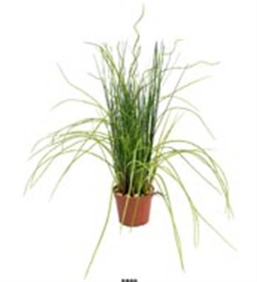 Herbe dense artificielle en pot H 35 cm