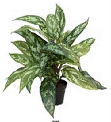 Plante Aglaonema Artificielle en pot H 37 cm