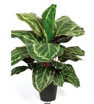 Plante Maranta Artificiel en pot H 55 cm