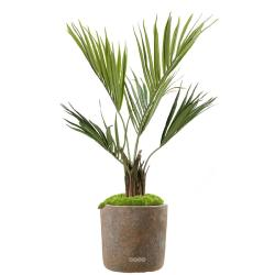 Palmier Kentia Artificiel Howea en pot H 100 cm